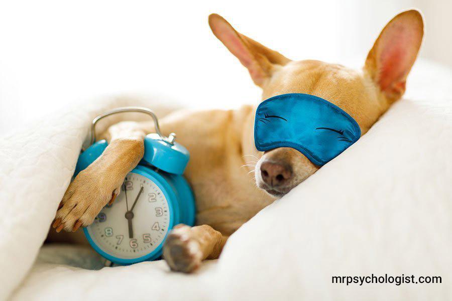 آیا حیوانات به درمان اختلال خواب کمک میکنند؟